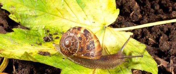 snail-388092