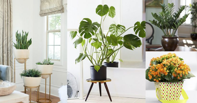Artlies for Low maintenance indoor trees